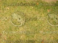 Lawn  20090119 108