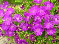Flower 20090328 087