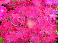 Flower 20090405 006