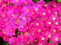 Flower 20090405 008