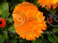 Flower 20090405 009