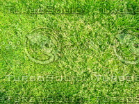 Lawn     20090405 010