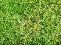 Lawn  20090405 012