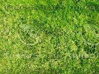 Lawn  20090405 018