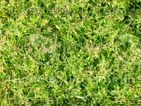Lawn  20090405 020