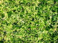 Lawn  20090405 021