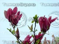Flower 20090405 027