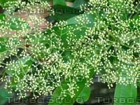 Plant 20090409 006