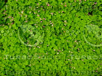 Green Plant 20090423 006