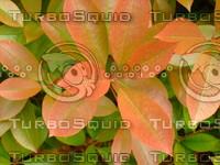 Plant 20090423 009