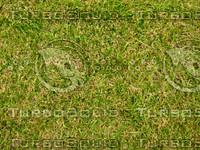 Lawn 20090530 010