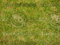 Lawn 20090530 015
