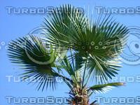 Tree 20090530b 005