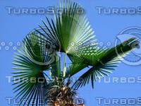 Tree 20090530b 009