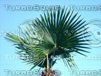 Tree 20090530b 011