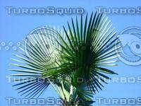 Tree 20090530b 013