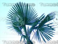 Tree 20090530b 027
