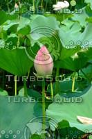 Lotus  20090727 163