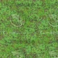 Clover Field Seamless Pattern