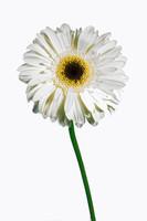 White01 Flowers Photo Pack Drux