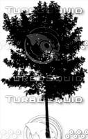 Sketch Elevation Tree