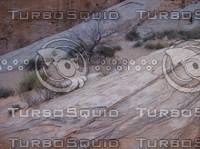 Las Vegas Desert Rock & Brush 4.jpg