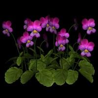 TX Flower Group 025