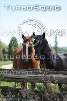 SPX_Horse001