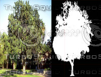 Tree Hight preview.jpg