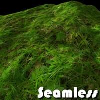 Forest grass texture # 2