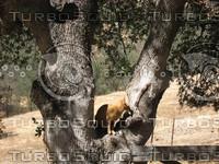cat in tree2.jpg