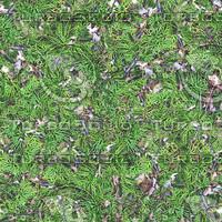 forestfoliage.jpg