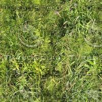 Grass texture # 3