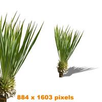 Palm bush2
