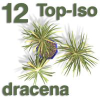 Top Views - dracena