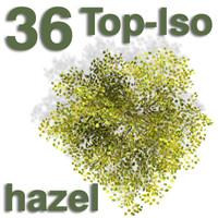 Top Views - hazel