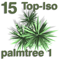 Top Views - palm 1