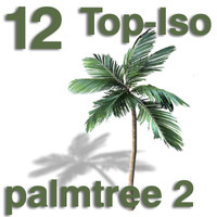 Top Views - palm 2