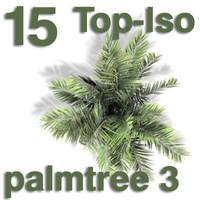 Top Views - palm 3