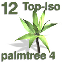 Top Views - palm 4
