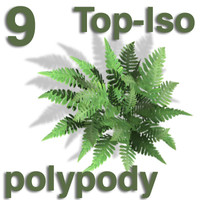 Top Views - polypody