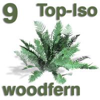 Top Views - woodfern