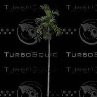 tree-02-46