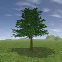 Tree Intro