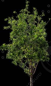 billboard tree 02