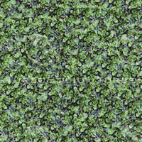 Violet seamless pattern
