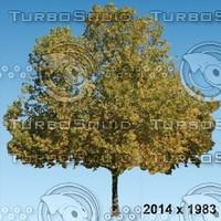 02_tree_autumn001.zip