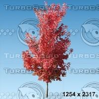 02_tree_autumn002.zip