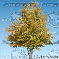 02_tree_autumn007.zip