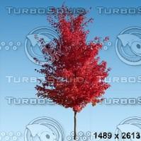 02_tree_autumn009.zip
